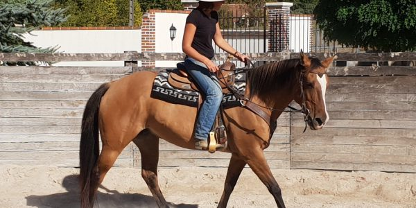 CHEETA TWO DRIFT, superbe jument Quarter Horse de 10 ans est mise en vente !